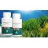 Купить :  Спирулина-природный антиоксидант