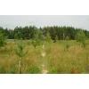 Предлагаю купить земельный участок 20га в Калужской области